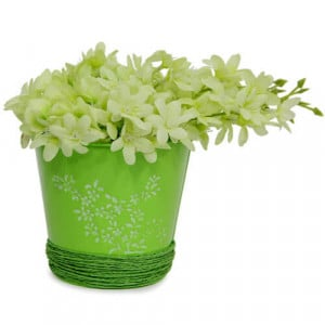 Pretty Flower Arrangement - Online Gift Ideas