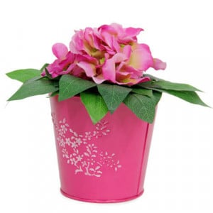Striking Flower Arrangement - Online Gift Ideas