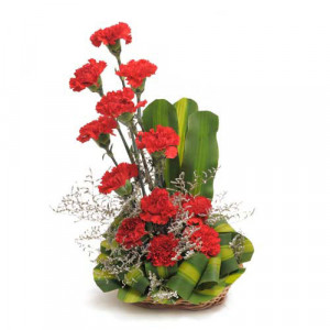 Ruby Red 12 Red Carnations