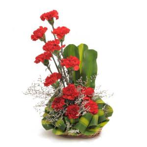 Ruby Red 12 Red Carnations - Flower Basket Arrangements Online