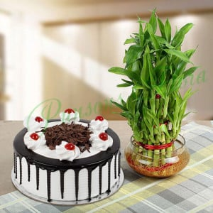 Eggless Blackforest Cake N Three Layer Bamboo - Cake Delivery in Mumbai