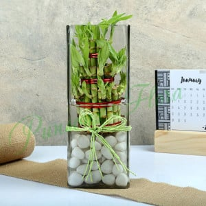 Exquisite Three Layer Bamboo Terrarium - Send Flowers to Dehradun