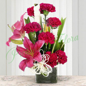 Serene Carnation - Send Flowers to Dehradun