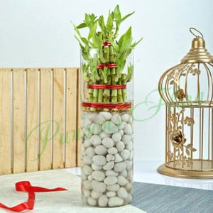 Three Layer Bamboo Decor Terrarium - Online Gift Ideas