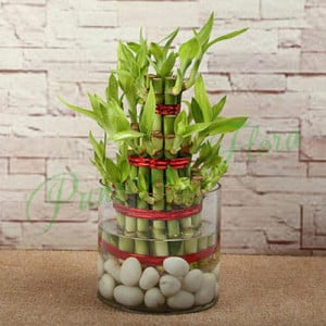 Three Layer Bamboo Luck Terrarium - Online Gift Ideas