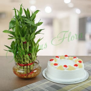 Three Layer Bamboo With Pineapple Cake