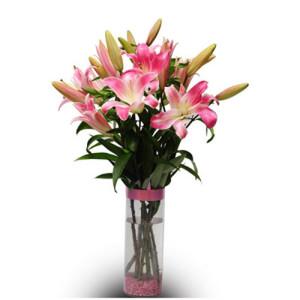 Best Greetings 6 Pink Lilies