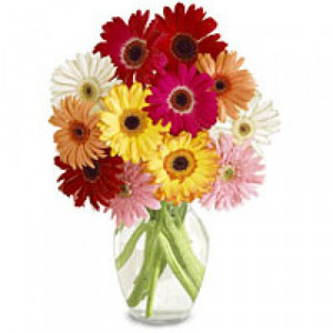 Colorfull Day 12 Mix Gerberas