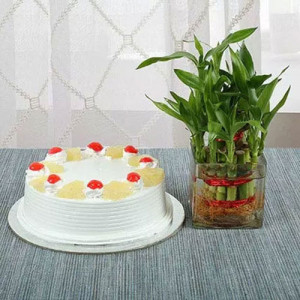 Lucky Bamboo N Pineapple Cake - online flowers delivery in dera bassi