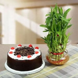 Lucky Bamboo N Blackforest Cake - online flowers delivery in dera bassi