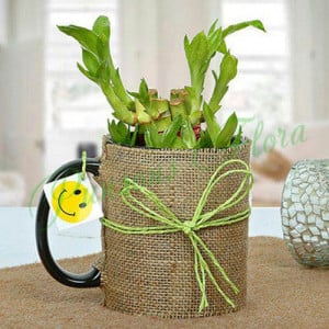Mug Full of Lucky Bamboo Plant - online flowers delivery in dera bassi