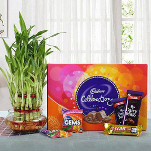 Yummy Chocolates N Three Layer Bamboo Plant Combo - Online Gift Ideas