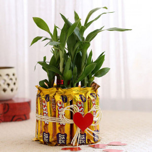Lucky Bamboo with Five Star Chocolates Combo - Send Plants n Chocolates Online