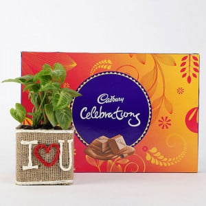 Syngonium Plant In Vase With Cadbury Celebrations - Online Gift Ideas