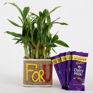 2 Layer Lucky Bamboo In For U Vase With Dairy Milk Silk Chocolates - Online Gift Ideas