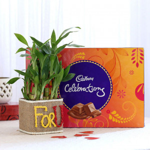 2 Layer Lucky Bamboo In For U Vase With Cadbury Celebrations - Send Plants n Chocolates Online