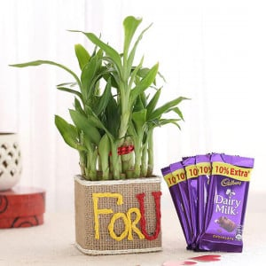 2 Layer Lucky Bamboo In For U Vase With Dairy Milk Chocolates - Send Plants n Chocolates Online