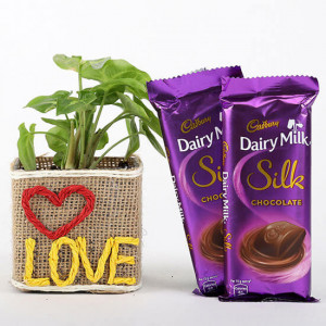 Syngonium Plant With 2 Dairy Milk Silk Chocolates - Online Gift Ideas