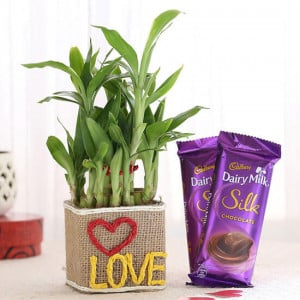 2 Layer Lucky Bamboo In Love Vase With Dairy Milk Silk Chocolates
