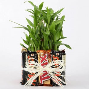 3 Layer Lucky Bamboo In Square Glass Vase With Chocolates - Online Gift Ideas