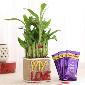 2 Layer Lucky Bamboo In My Love Vase & Dairy Milk Chocolates - Online Gift Ideas