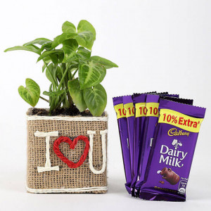 Syngonium Plant In Vase With Dairy Milk Chocolates