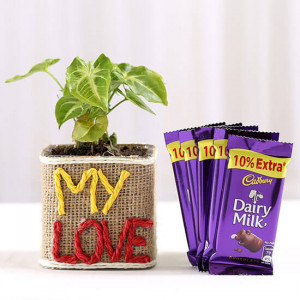 Syngonium Plant With Dairy Milk Chocolates