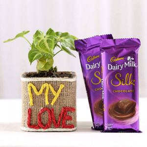 Syngonium Plant With Dairy Milk Silk Chocolates - Online Gift Ideas