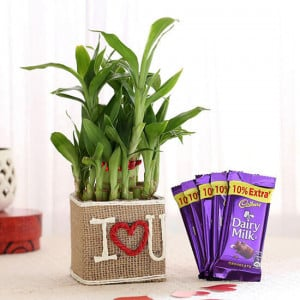 2 Layer Lucky Bamboo In I Love U Vase With Dairy Milk Chocolates - Online Gift Ideas