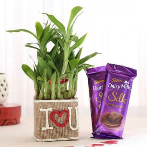 2 Layer Lucky Bamboo In I Love U Vase With Dairy Milk Silk Chocolates - Send Plants n Chocolates Online