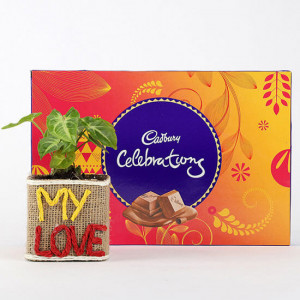 Syngonium Plant With Cadbury Celebrations