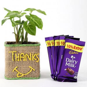 Syngonium Plant In Glass Vase With Dairy Milk Chocolates
