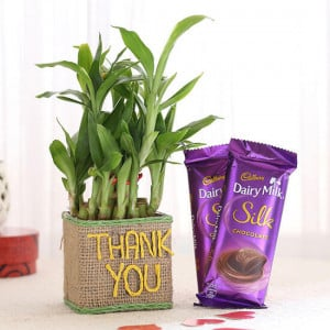 2 Layer Lucky Bamboo In Thank You Vase With Dairy Milk Silk Chocolates - Online Gift Ideas
