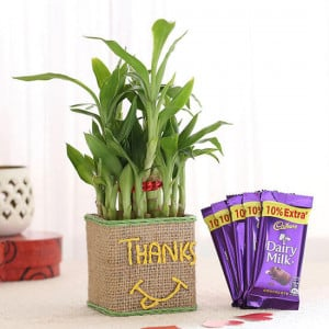 2 Layer Lucky Bamboo In Glass Vase With Dairy Milk Chocolates - Online Gift Ideas