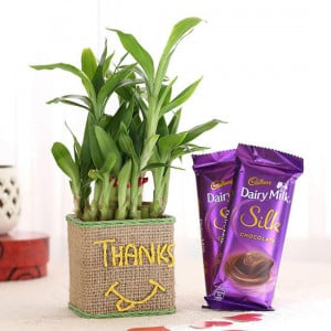 2 Layer Lucky Bamboo In Glass Vase With Dairy Milk Silk Chocolates - Send Plants n Chocolates Online