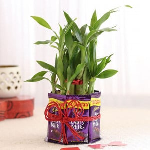 2 Layer Lucky Bamboo With Heart Shaped Tag