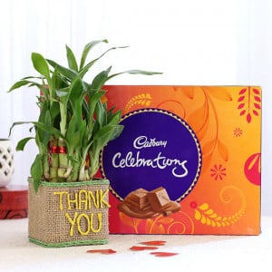 2 Layer Lucky Bamboo In Thank You Vase With Cadbury Celebrations