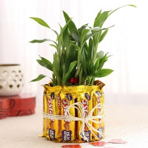 2 Layer Lucky Bamboo With 5 Star Chocolates - Chocolate Bouquet Online