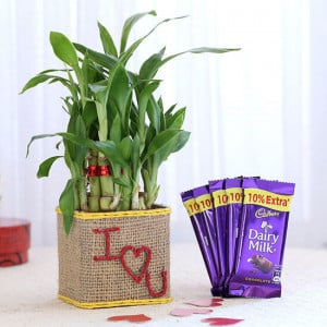2 Layer Lucky Bamboo In I Love U Glass Vase With Dairy Milk Chocolates