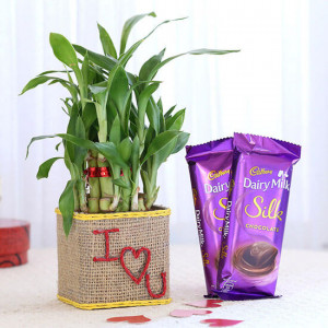 2 Layer Lucky Bamboo In I Love U Glass Vase With Dairy Milk Silk Chocolates