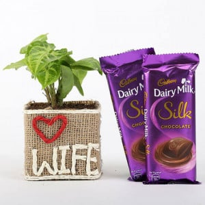 Syngonium Plant in Love Wife Vase With Dairy Milk Silk Chocolates