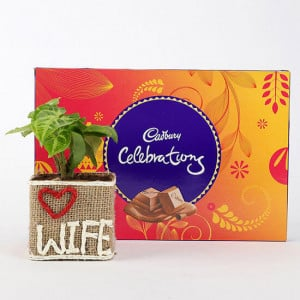 Syngonium Plant in Love Wife Vase With Cadbury Celebrations