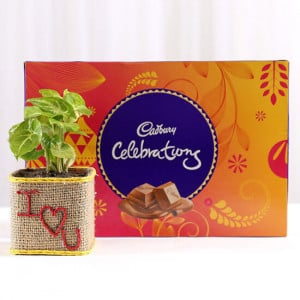 Syngonium Plant With Cadbury Celebrations For Valentines Day - Send Plants n Chocolates Online