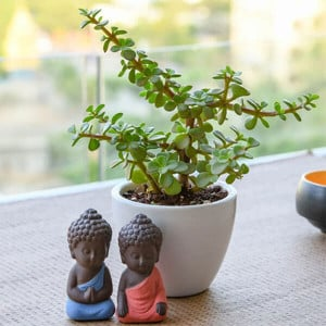 Spread Luck and Happiness with Jade Plant and Buddha