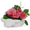 Phinolopsis Flower Arrangement