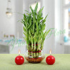 Three Layer Bamboo Plant With Red Candles