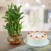 Three Layer Bamboo With Pineapple Cake