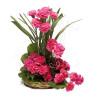 Sunshine 24 Pink Carnations