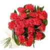 24 Red Carnation