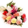 24 Mixed Carnation